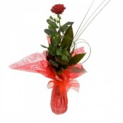 SINGLE GIFT WRAPPED RED ROSE